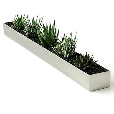 Picture of Houseplant Trough by Gus Modern