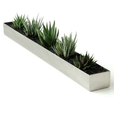 Picture for Houseplant Trough by Gus Modern